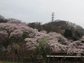 290409秋川湖 (5).JPG
