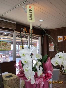 300106秋川湖 (1).JPG