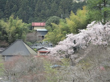 190414養沢 (5).JPG